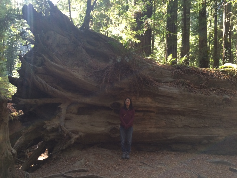 Redwood with Jenny